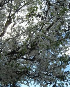 Imbolc Tree
